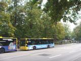 38 Bäume müssten weg. Grund für Widerstand? Foto: Aigner