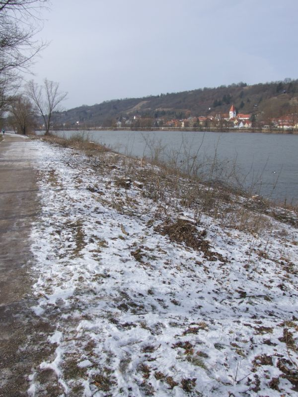"Ein ""Stoppelfeld"" an Baumstümpfen entlang des Donau-Ufers. (Foto: hb)"