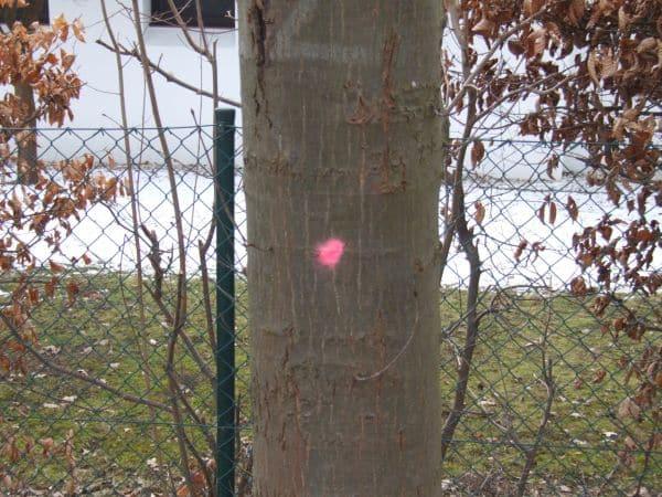 Jede Markierung wird momentan von der Bevölkerung aufmerksam beobachtet. (Foto: hb)