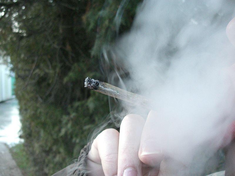 Ein 45-jähriger Straubinger hat in seiner Wohnung eine ganze Menge Cannabis für den Eigenbedarf angebaut. Bild: Chmee2 / Wikimedia Commons.
