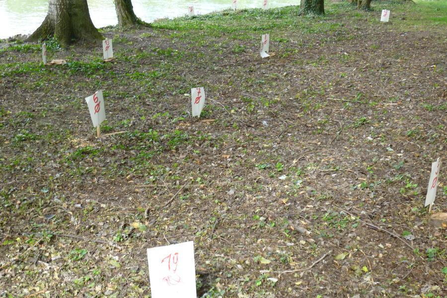 Baumfrevel? Walter Cerull hat einige Abholzungen samt Durchmesser dokumentiert.