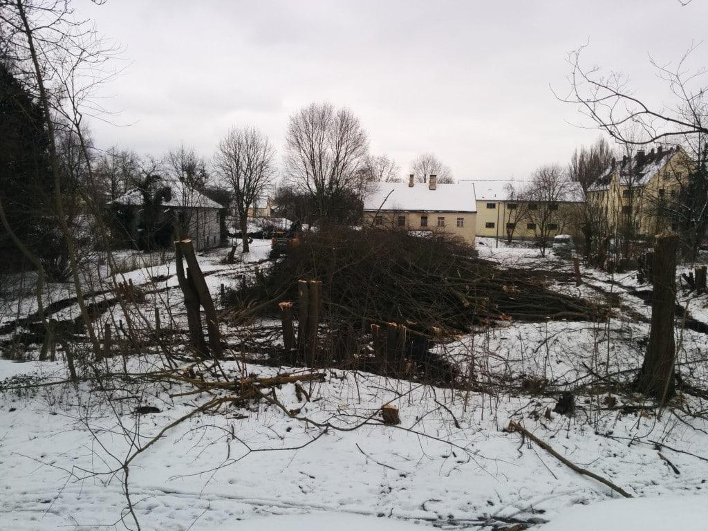 Die Bäume an der Bäckergasse sind abgeräumt. Foto: Bantner
