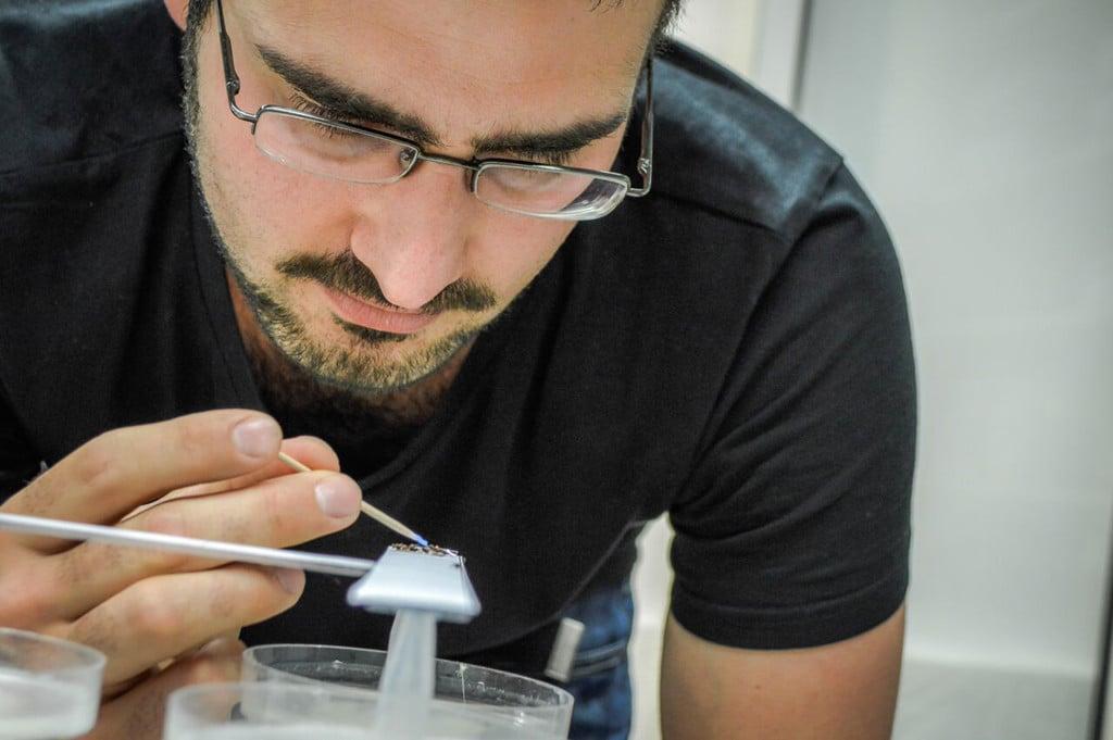 Dr. Tomer Czaczkes bei der Untersuchung des Verhaltens von Ameisen. Bildnachweis: Dr. Tomer Czaczkes
